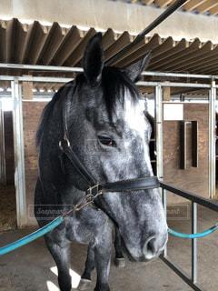 馬を撮りましたの写真・画像素材[1927355]