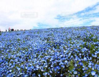 花のクローズアップの写真・画像素材[2421872]