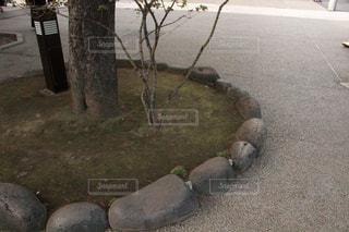 道路脇の消火栓の写真・画像素材[2421940]