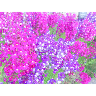 カラフルな花壇の写真・画像素材[1940456]