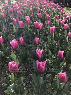 花の写真・画像素材[1999167]