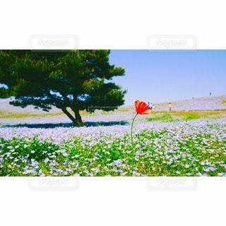 自然の写真・画像素材[114380]