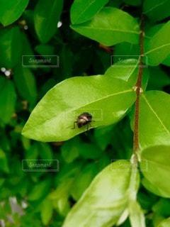 自然の写真・画像素材[66179]