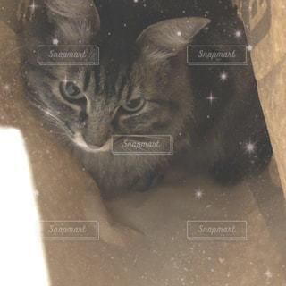 カメラを見ている猫の写真・画像素材[1887027]