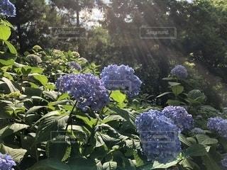 花の写真・画像素材[2247125]
