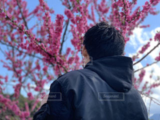 桜の木前に立っている男の写真・画像素材[1899776]