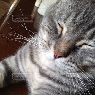 猫の写真・画像素材[66299]