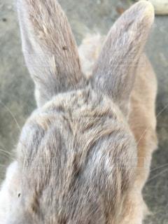 動物の写真・画像素材[2012987]