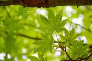 植物の写真・画像素材[74698]