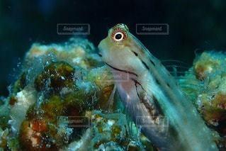 No.78354 魚