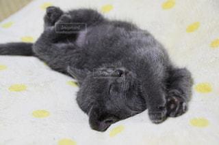 猫 - No.142871