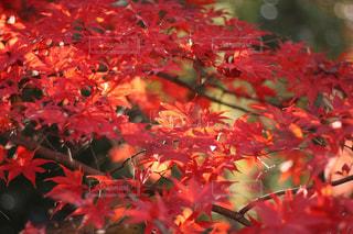 近くの木のアップの写真・画像素材[891994]