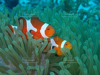 水面下を泳ぐ魚たちの写真・画像素材[1283132]