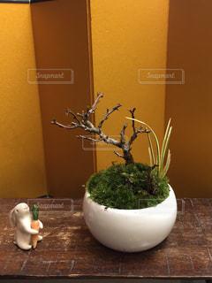 初盆栽作りの写真・画像素材[1901583]