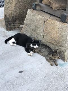 猫の昼寝の写真・画像素材[1952457]