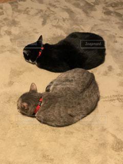 猫2匹の写真・画像素材[1895125]