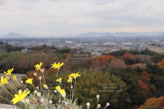 山の前に黄色の花の写真・画像素材[1896921]
