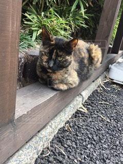 猫の写真・画像素材[66587]