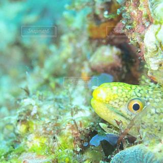 魚の接写の写真・画像素材[2110448]