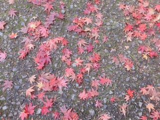 秋の落ち葉の写真・画像素材[1944126]