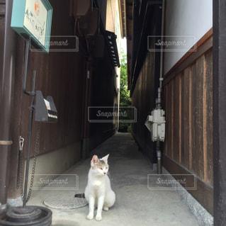 建物の前に座っている猫の写真・画像素材[1897885]