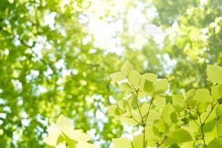 森林 - No.79076