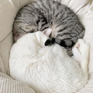 ベッドの上で横になっている猫の写真・画像素材[1892098]
