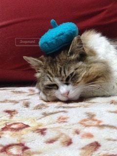 猫三昧の写真・画像素材[66775]