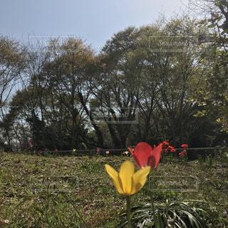 春の訪れの写真・画像素材[1096122]