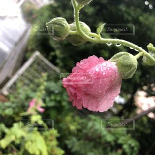 花のクローズアップの写真・画像素材[2217943]