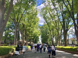 木の隣の通りを歩く人々のグループの写真・画像素材[2338569]