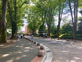 通りの脇に木が並んでいる空の道の写真・画像素材[2338570]