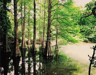 湖の木の写真・画像素材[3097521]