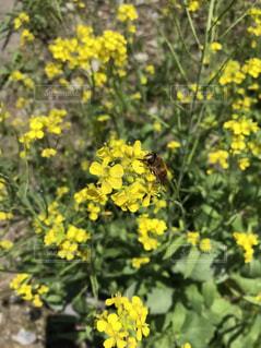 黄色の花の写真・画像素材[2081526]