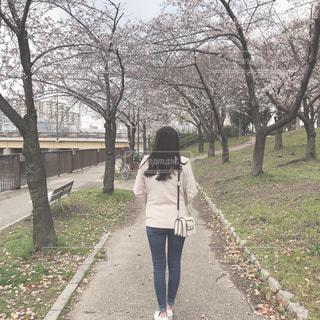 桜並木の写真・画像素材[1888197]