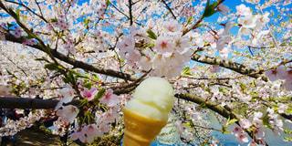 木の花の花瓶の写真・画像素材[2078578]