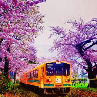 電車と桜の写真・画像素材[2078579]