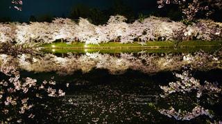 池に映る桜の木の写真・画像素材[2078581]