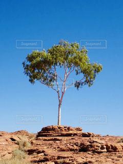 木の写真・画像素材[2108145]