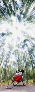竹林の写真・画像素材[2129206]