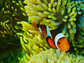 水の中の魚の群しの写真・画像素材[2332529]