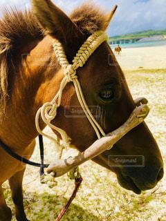 馬のクローズアップの写真・画像素材[2390001]