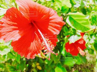 花のクローズアップの写真・画像素材[2392060]