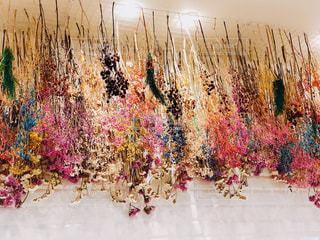 カラフルな花の群しの写真・画像素材[2441641]
