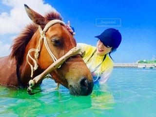 馬と海の写真・画像素材[2606445]