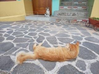 地面に横たわっている猫の写真・画像素材[2704512]