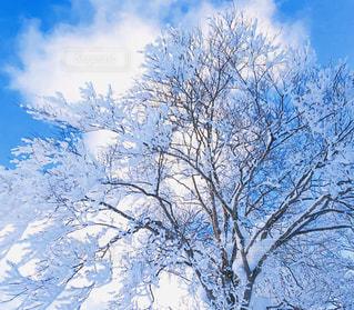 雪の中の木の写真・画像素材[2822693]