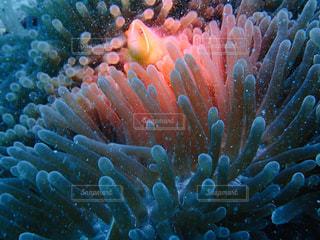 サンゴのクローズアップの写真・画像素材[2929368]