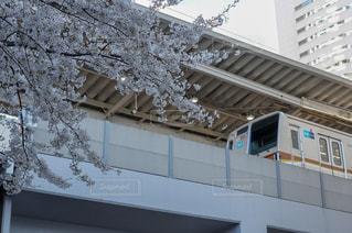 電車と桜の写真・画像素材[1940284]