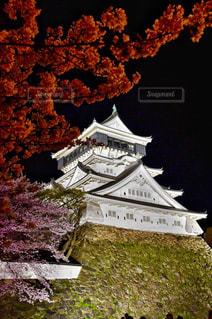 夜桜の写真・画像素材[2027826]